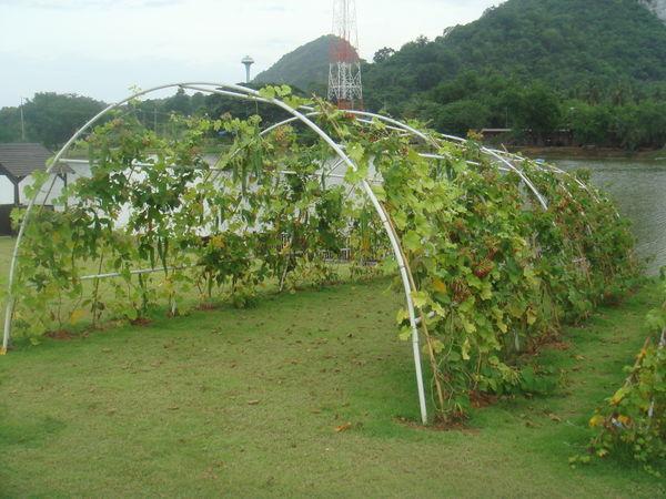 1350951-Silverlake-vineyard-0.jpg