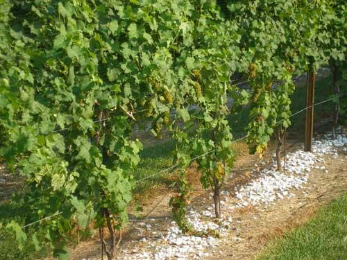 vineyard-property.jpg