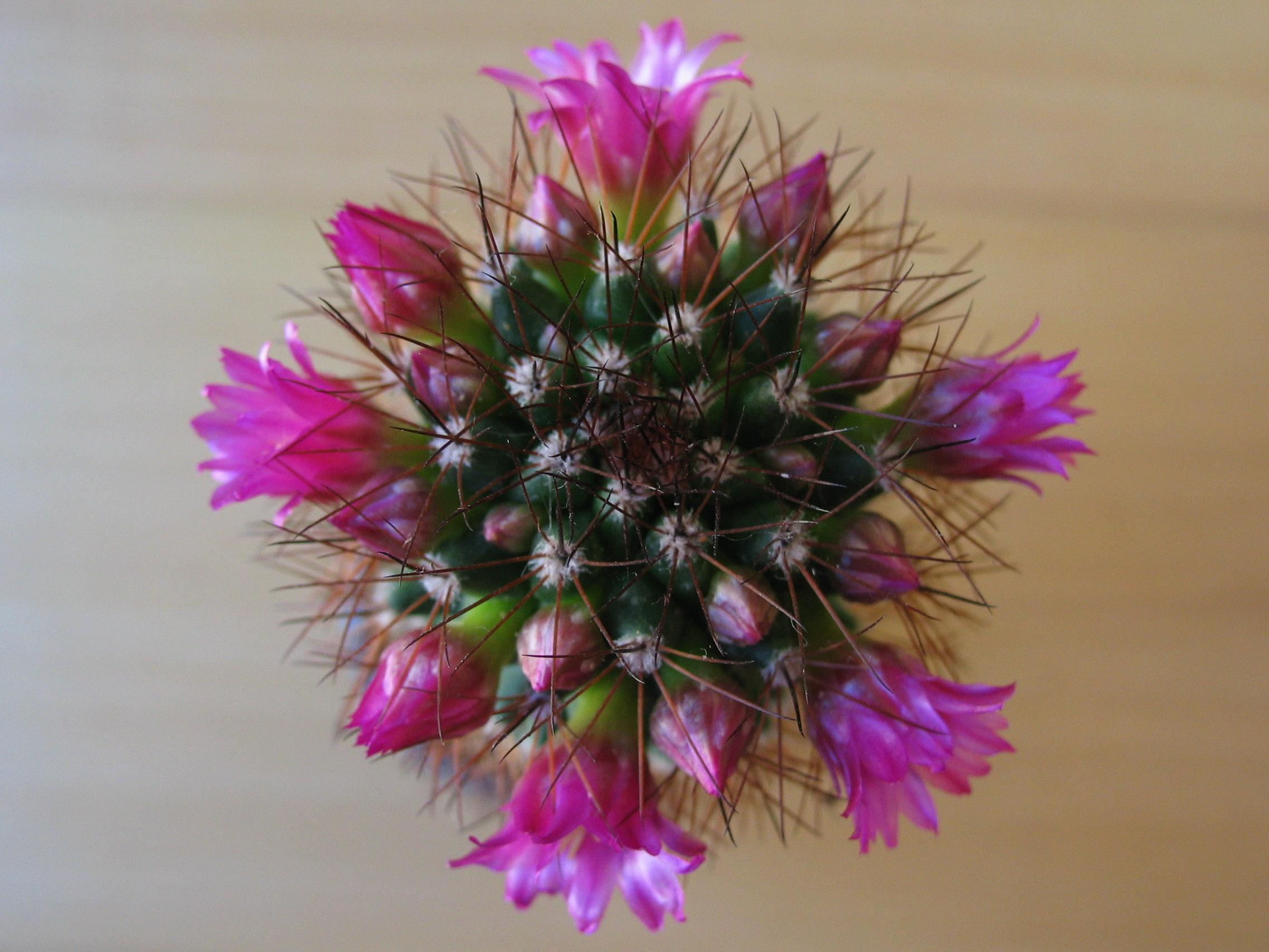 kaktus111.jpg