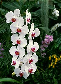orchideen-wichmann2.jpg