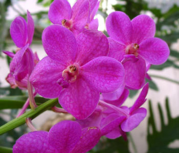 orhideq-4.jpg