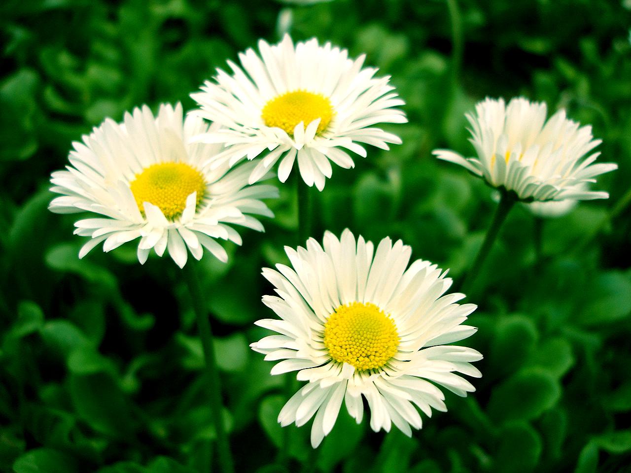 flowers-iko.jpg
