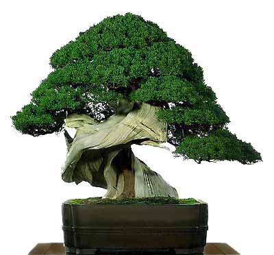 bonsai02.jpg