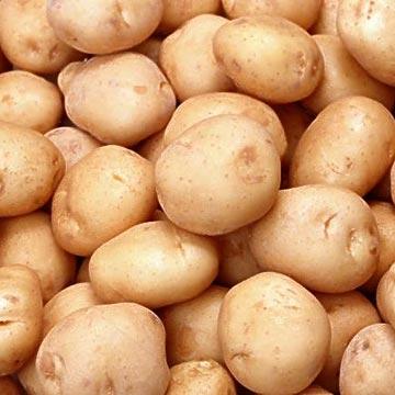 What-Is-Potato-Plant-Pesticide.jpg