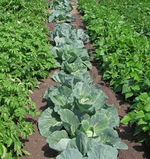 Vegetable-Garden300x318.jpg
