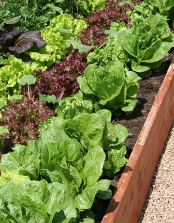 vegetable-garden-GEXPERT-de.jpg
